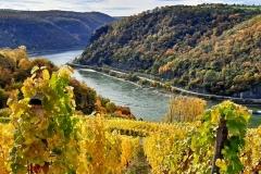 Herbst am Rheinsteig - November 2020